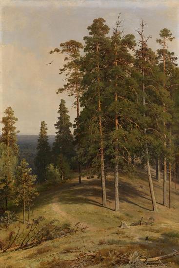 The Pine Forest, 1895-Ivan Ivanovich Shishkin-Giclee Print