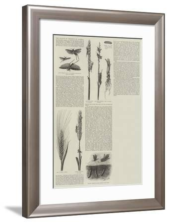 The Plague of Crickets in Algeria--Framed Giclee Print