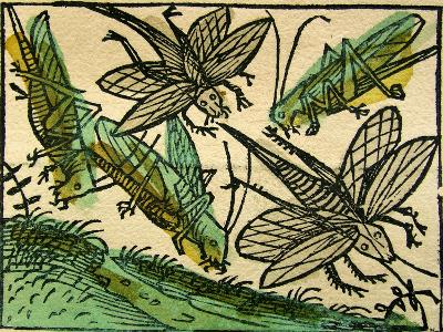 The Plague of Locusts, Published in the Nuremberg Chronicle, 1493--Giclee Print