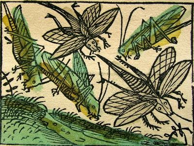 https://imgc.artprintimages.com/img/print/the-plague-of-locusts-published-in-the-nuremberg-chronicle-1493_u-l-ppwsr00.jpg?p=0