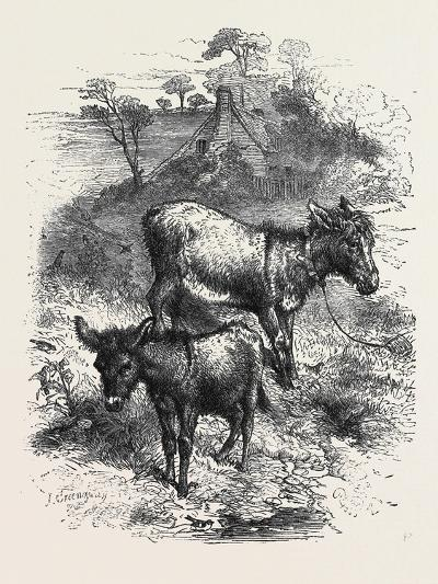 The Poetry of Nature: the Young Ass-Harrison William Weir-Giclee Print