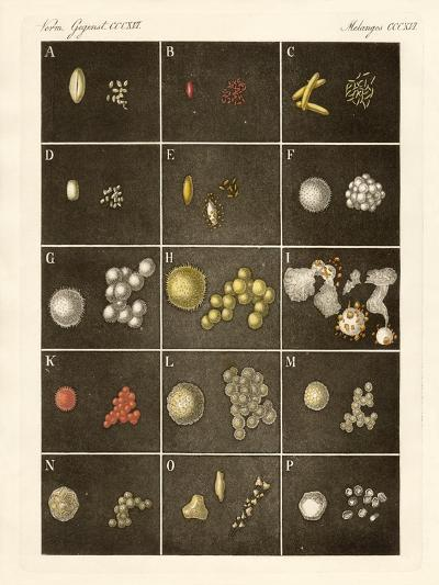 The Pollen or Pollen of Plants--Giclee Print
