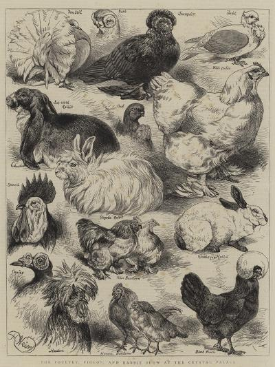 The Poultry, Pigeon, and Rabbit Show at the Crystal Palace-Harrison William Weir-Giclee Print