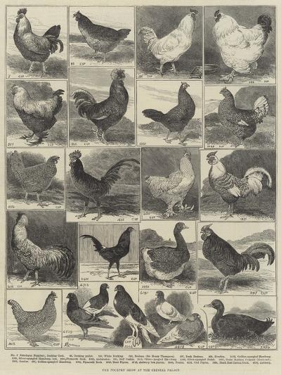 The Poultry Show at the Crystal Palace-Alfred Courbould-Giclee Print