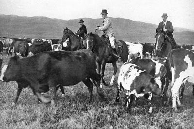 The Prince of Wales Rounding Up Cattle in Alberta, Canada, C1930s--Giclee Print