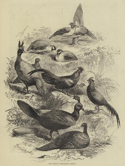 The Prince's Menagerie, Birds--Giclee Print
