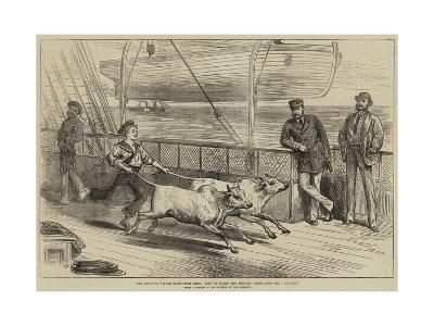 The Prince's Voyage Home from India, Life on Board the Serapis, Exercising the Gainees-Arthur Hopkins-Giclee Print