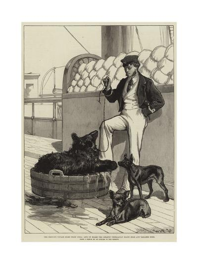The Prince's Voyage Home from India--Giclee Print