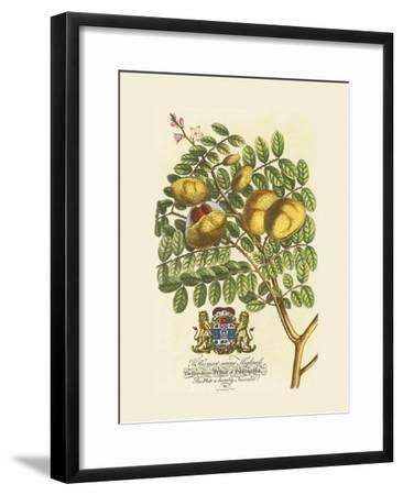 The Prince Saxegotha Botanical-Georg Ehret-Framed Premium Giclee Print