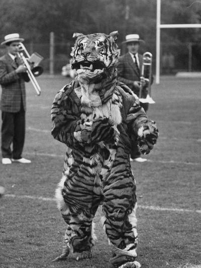 The Princeton Mascot, a Tiger--Photographic Print