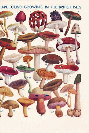 'The Principal Edible and Poisonous Fungi In The British Isles', 1935-Unknown-Giclee Print