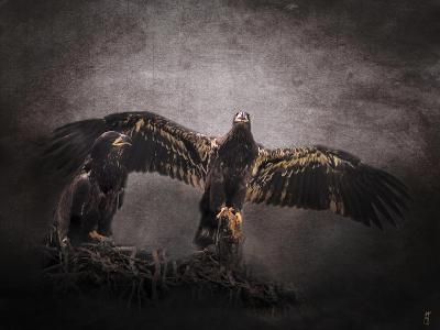 The Protector Juvenile Bald Eagles-Jai Johnson-Giclee Print