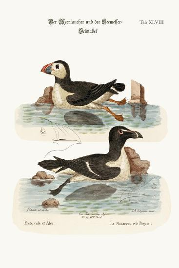 The Puffin, and the Razor-Bill, 1749-73-George Edwards-Stretched Canvas Print