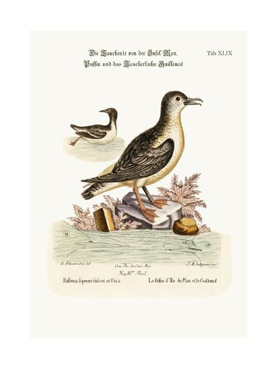 The Puffin of the Isle of Man, and the Guillemot, 1749-73-George Edwards-Giclee Print
