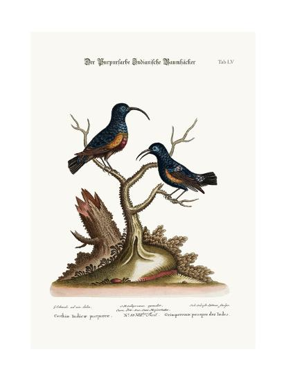 The Purple Indian Creepers, 1749-73-George Edwards-Giclee Print