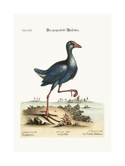 The Purple Water-Hen, 1749-73-George Edwards-Giclee Print