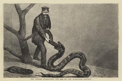 The Python Swallowing the Boa at the Zoological Gardens--Giclee Print
