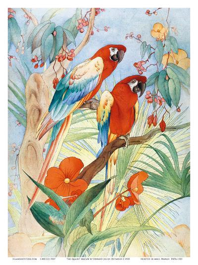 The Quaint Macaw, Red and Blue Macaws (Ara Macao) , From the Painting entitled Aristocrats-Edward Detmold-Art Print
