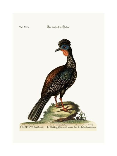 The Quan or Guan, 1749-73-George Edwards-Giclee Print