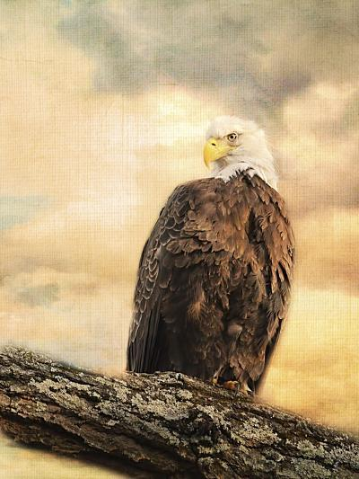 The Queen at Rest Bald Eagle-Jai Johnson-Giclee Print