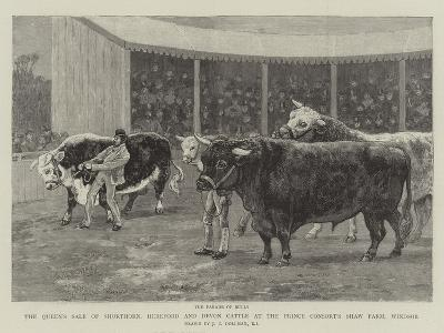 The Queen's Sale of Shorthorn, Hereford and Devon Cattle at the Prince Consort's Shaw Farm, Windsor-John Charles Dollman-Giclee Print