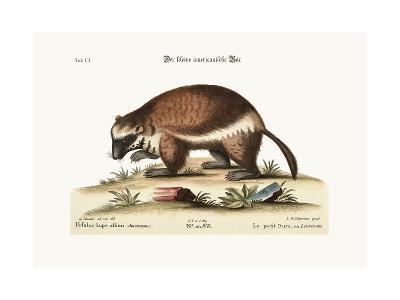 The Quick-Hatch or Wolverene, 1749-73-George Edwards-Giclee Print