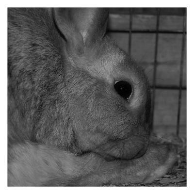 The Rabbit-Carl Ellie-Art Print