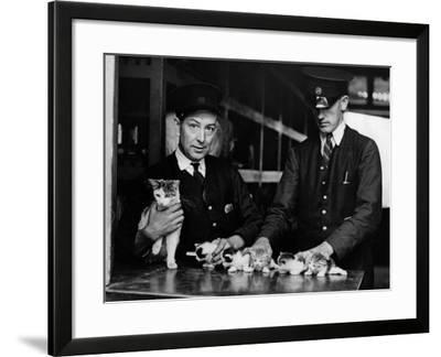 The Railway Kittens--Framed Photographic Print