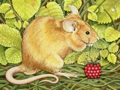 https://imgc.artprintimages.com/img/print/the-raspberry-mouse_u-l-pjce450.jpg?p=0