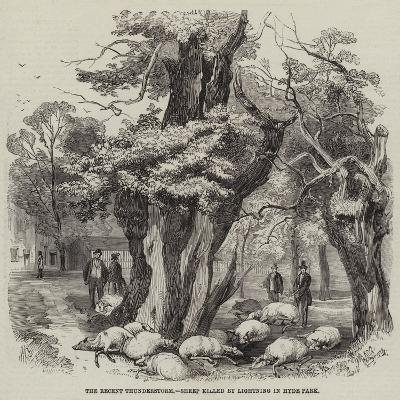 The Recent Thunderstorm, Sheep Killed by Lightning in Hyde Park--Giclee Print