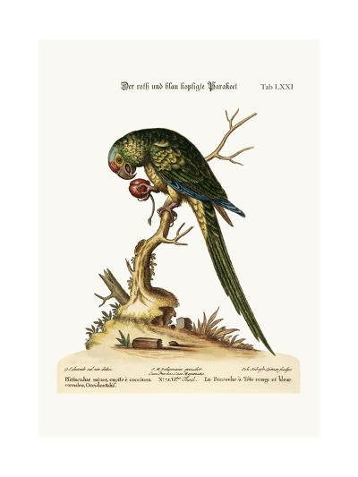 The Red and Blue-Headed Parrakeet, 1749-73-George Edwards-Giclee Print