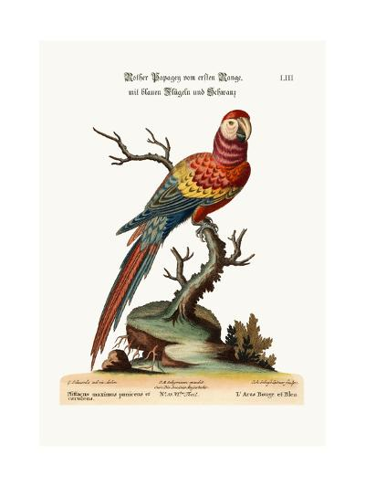 The Red and Blue Maccaw, 1749-73-George Edwards-Giclee Print