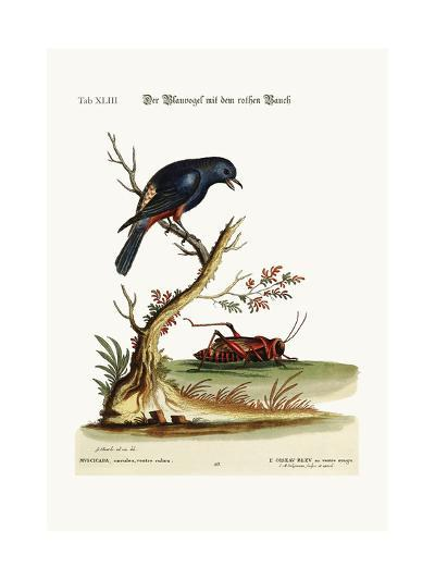The Red-Bellied Blue-Bird, 1749-73-George Edwards-Giclee Print