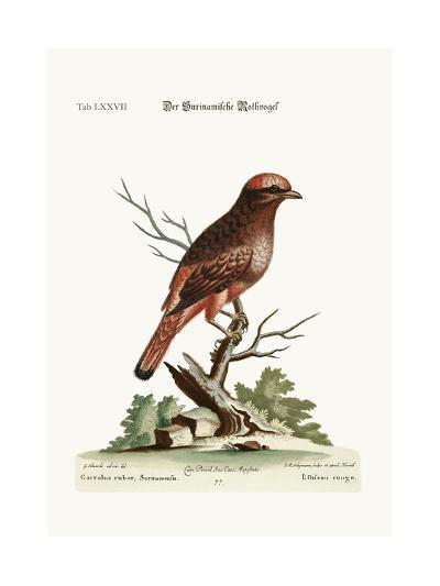 The Red Bird from Surinam, 1749-73-George Edwards-Giclee Print
