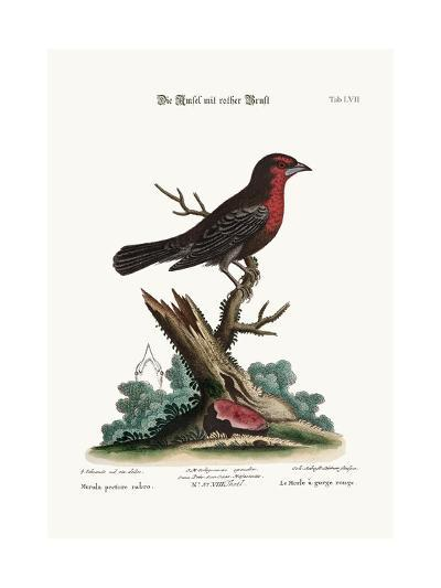 The Red-Breasted Black-Bird, 1749-73-George Edwards-Giclee Print