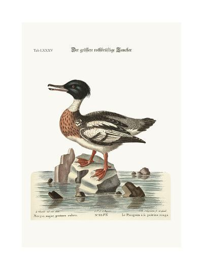 The Red-Breasted Goosander, 1749-73-George Edwards-Giclee Print