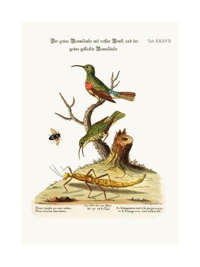 The Red-Breasted Green Creeper, and the Spotted Green Creeper, 1749-73-George Edwards-Giclee Print