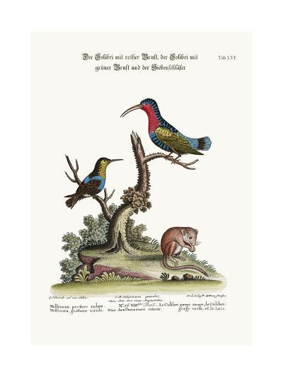 The Red-Breasted Hummingbird, the Green-Throated Hummingbird, and the Dormouse, 1749-73-George Edwards-Giclee Print