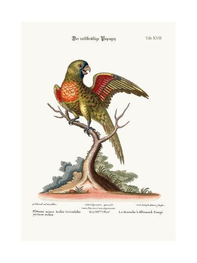 The Red-Breasted Parrakeet, 1749-73-George Edwards-Giclee Print