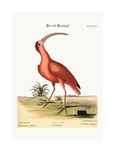 The Red Curlew, 1749-73-Mark Catesby-Giclee Print