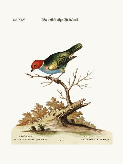 The Red-Headed Green-Finch, 1749-73-George Edwards-Giclee Print