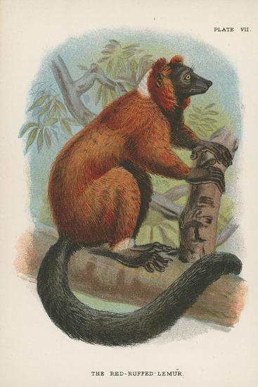 The Red-Ruffed Lemur--Giclee Print