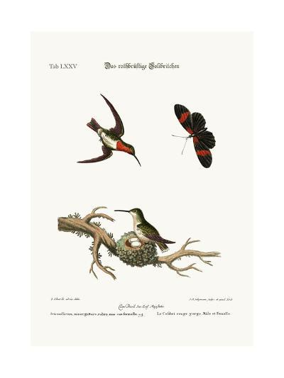 The Red-Throated Hummingbird, 1749-73-George Edwards-Giclee Print