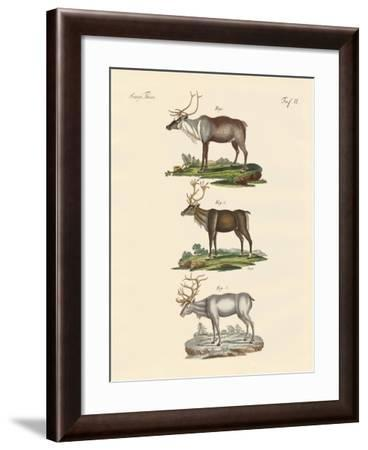 The Reindeer--Framed Giclee Print