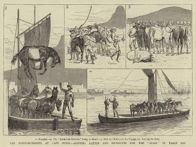 The Reinforcements at Cape Town, Shipping Cattle and Re-Mounts for the Spain in Table Bay--Giclee Print