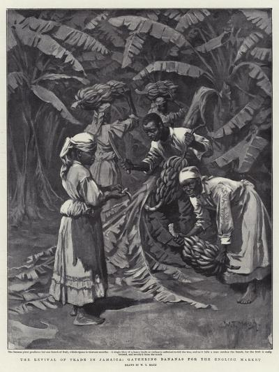 The Revival of Trade in Jamaica, Gathering Bananas for the English Market-William T^ Maud-Giclee Print