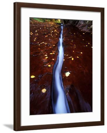 The Ribbon, Part of a Small Tributary of the Virgin River in Zion National Park-Keith Ladzinski-Framed Photographic Print