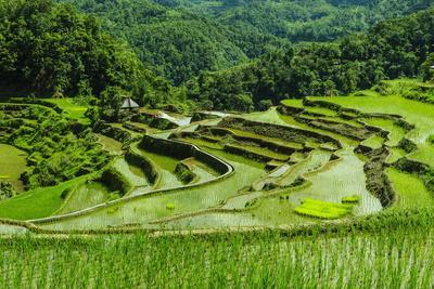The Rice Terraces of Banaue, Northern Luzon, Philippines, Southeast Asia, Asia-Michael Runkel-Framed Photographic Print