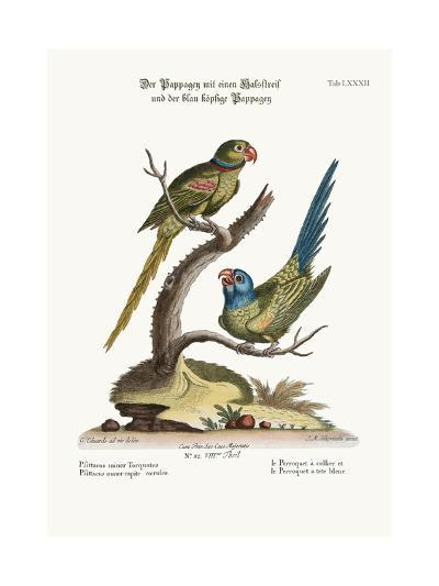 The Ring Parrakeet, and the Blue-Headed Parrakeet, 1749-73-George Edwards-Giclee Print