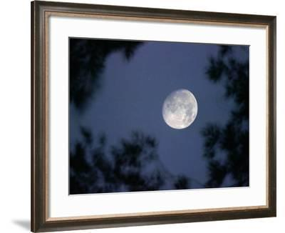 The Rising Moon, Nearly Full, is Visible Through the Trees Near Murphysboro, Ill--Framed Photographic Print